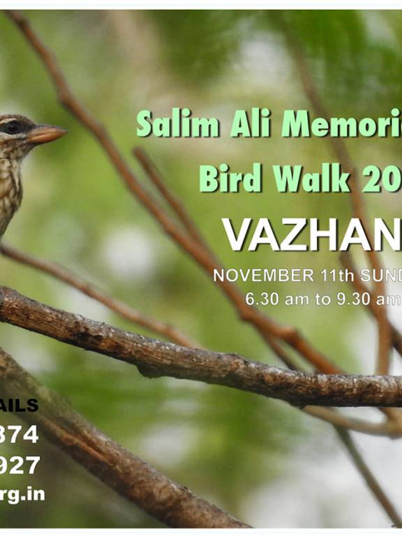Salim Ali Memorial Day Bird Walk 2018 @ Vazhani, Thrissur