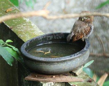 Agitha TG BirdBath 6