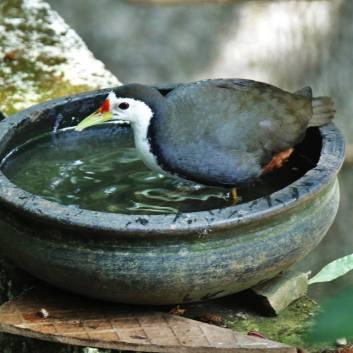Agitha TG BirdBath 7