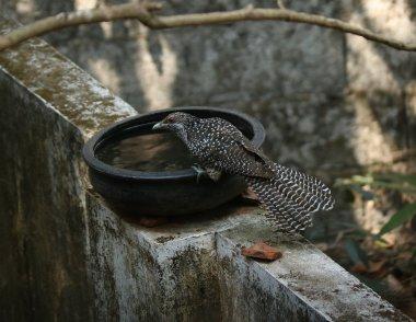 Agitha TG BirdBath 9