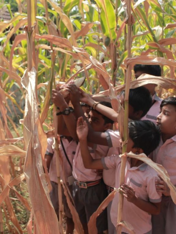 JBS School Nedupuzha Students Visited NEST's Maize Farming