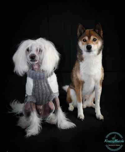 Hund mit gestrickten Pullover
