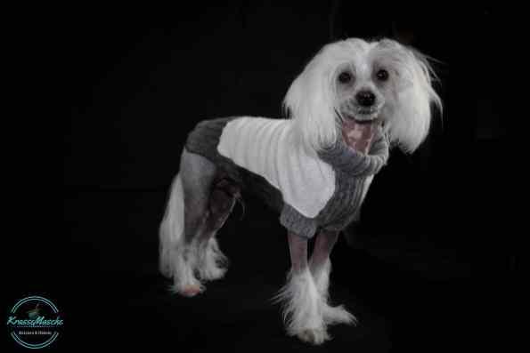 Hundepullover stricken. Maßanfertigung