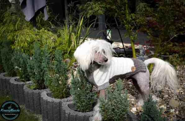 Hundepullover stricken wolle dogwear