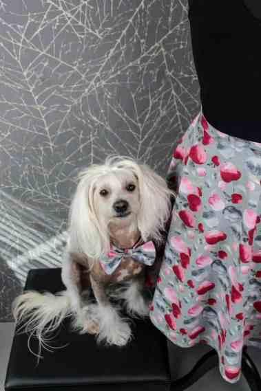 hundefliege in detailansicht am hund genäht aus apfelstoff von mezfabrics aus tuttifrutti stoff
