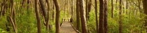 wooden dock NY image