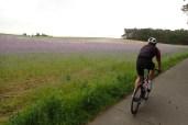 Sehr schönes Lavendelfeld