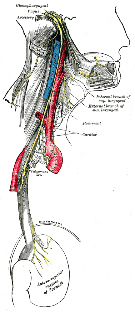The Pressure Point Stomach 9-10