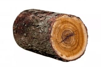 Kyusho 5 Element Theory wood