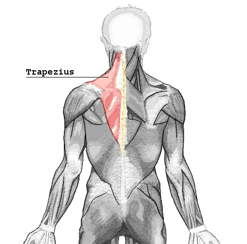 Pressure Point GB-20 Trapezius Muscle