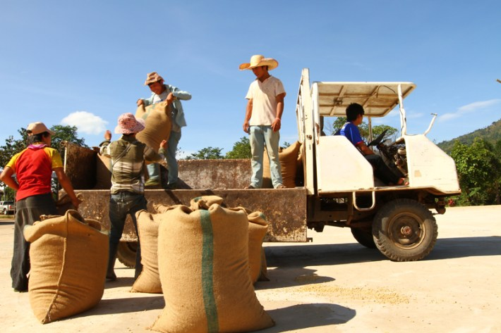 Coffee getting loaded on the custom made truck