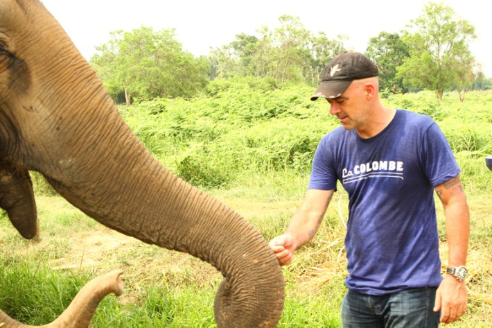 """Saying """"hi"""" to the elephant"""