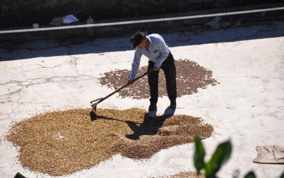 Guatemala-CafeImports-Imgs26