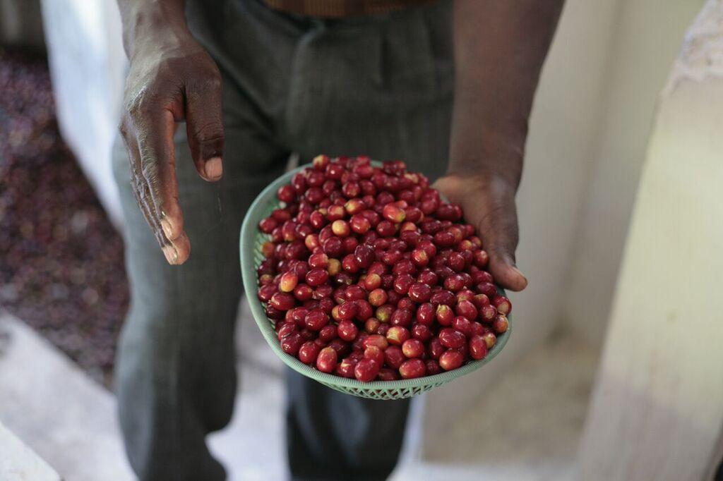 haiti-cherries