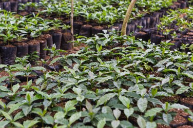President Clinton visits Haiti Coffee Academy President Clinton tours the academy and the tree nursery area. The Coffee Academy is designed as a space for farmers to access training, materials and information needed to improve their coffee yields and revitalize the coffee sector. He was joined by Todd Carmichael and JP Iberti, the Co-Founders of LaColombe, and Tobin Bickley, the Chief Financial Officer of LaColombe. Max W. Orenstein / Clinton Foundation