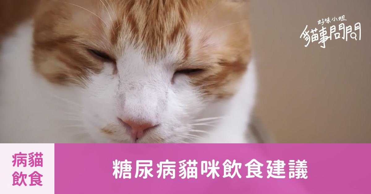 糖尿病貓咪飲食建議 – 貓事問問X好味小姐