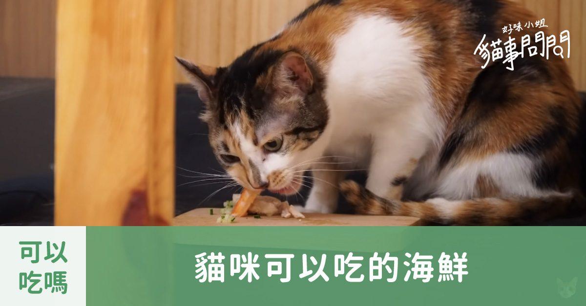 貓咪可以吃的海鮮有哪些呢? – 貓事問問X好味小姐