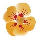 fleur_04-22_capucine-1