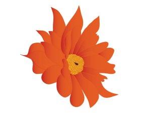 fleur_04-25_chrysantheme