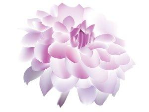 fleur_04-30_dahlia