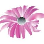 fleur_05-02_dimorphoteca
