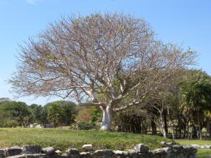 1203-Mexique-Riviera-Maya-Gaetan-Lanthier