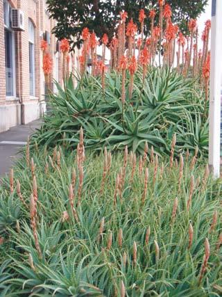 Aloe New Zealand