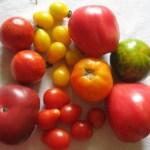 Heirloom varieties of summer vegetables