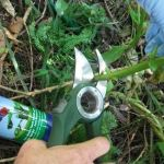 Combat pest weeds with Cut 'n'  Paste