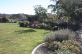 The planted garden progressing to establishment