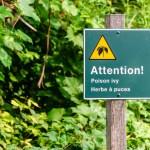 dangerous plants and wildlife