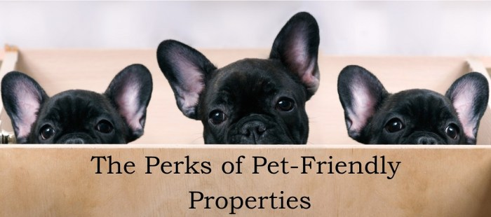 The Perks of Pet-Friendly Properties