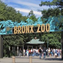 lec-sejour-linguistique-new-york-zoo-bronx