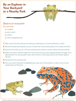 Olinguito Activity Sheet.indd