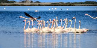 Lagoon in Lefkada with flamingos