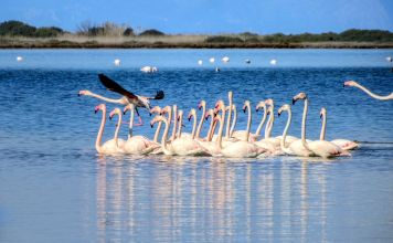 Lagoon in Lefkada with flamingos