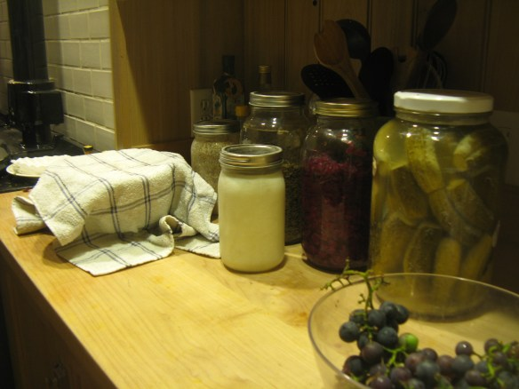My countertop fermenation farm: