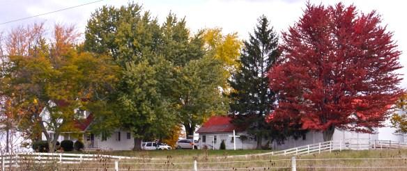 Family Farm Central Indiana