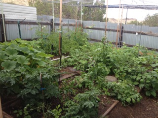 Shaded, big garden