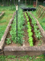 Kendra's raised bed is tidy and gorgeous!