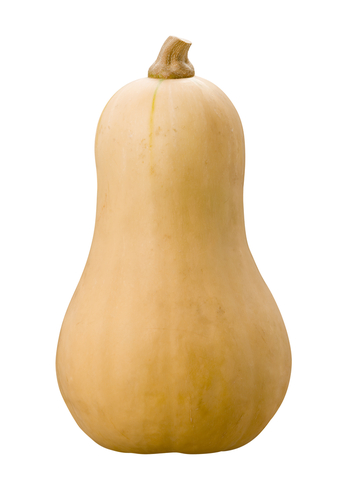 A perfect butternut squash--make sure yours are this clean when you put them in cold storage.