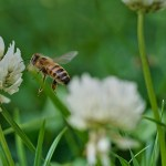 The Allure of Bees, Part 1