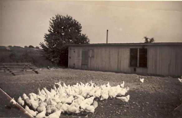 my great grandpa's chicken coop
