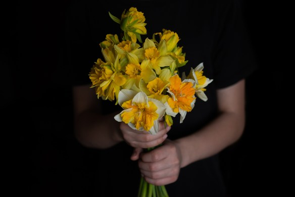 freshly picked daffodils