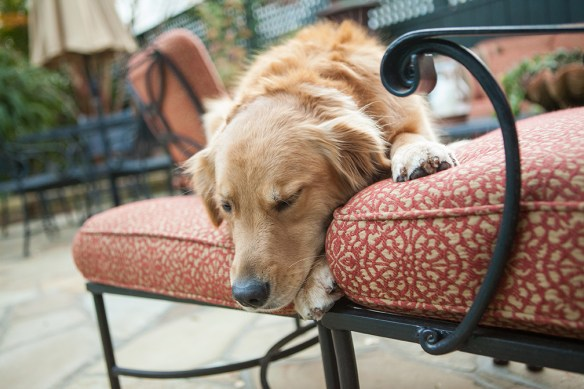 dog on patio cushion