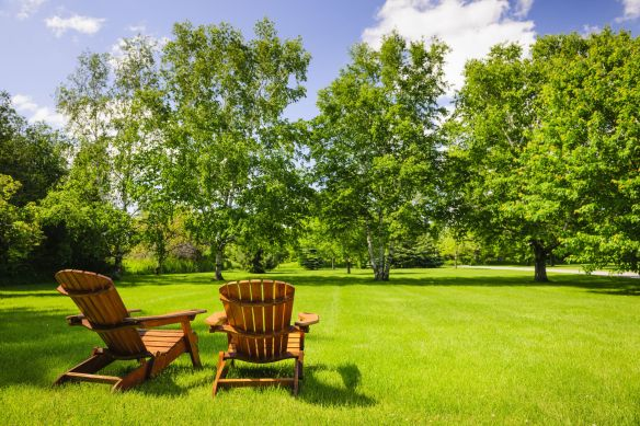 beautiful summer yard