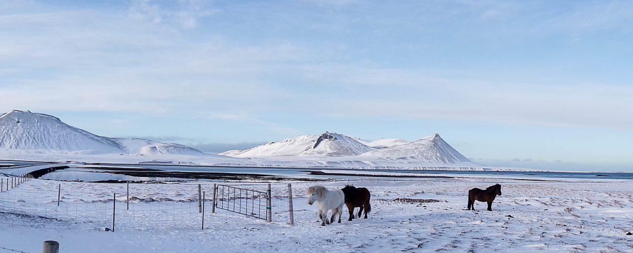 semaine en islande