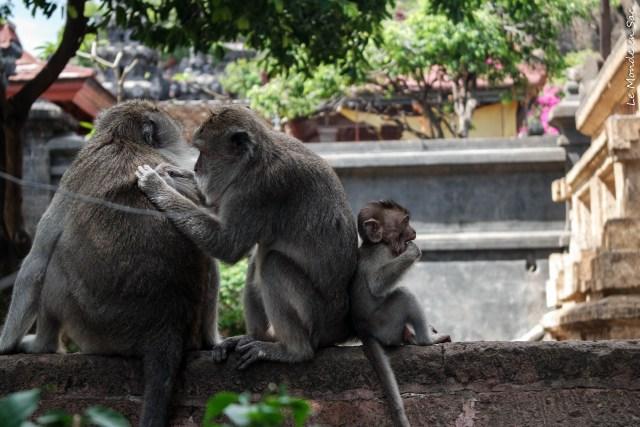 Singes sur le mur du temple Pulaki