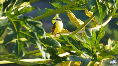 Oiseau du côté d'Arenal
