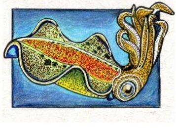 090314-cuttlefish